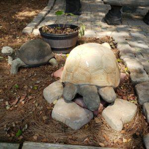 XL Turtle